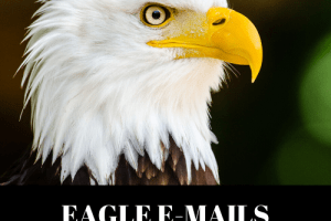 Dawud Islam - Eagle Emails - Get Your RESULTS To SOAR! Free Download